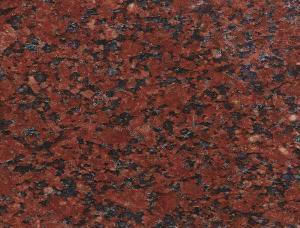 印度红大花