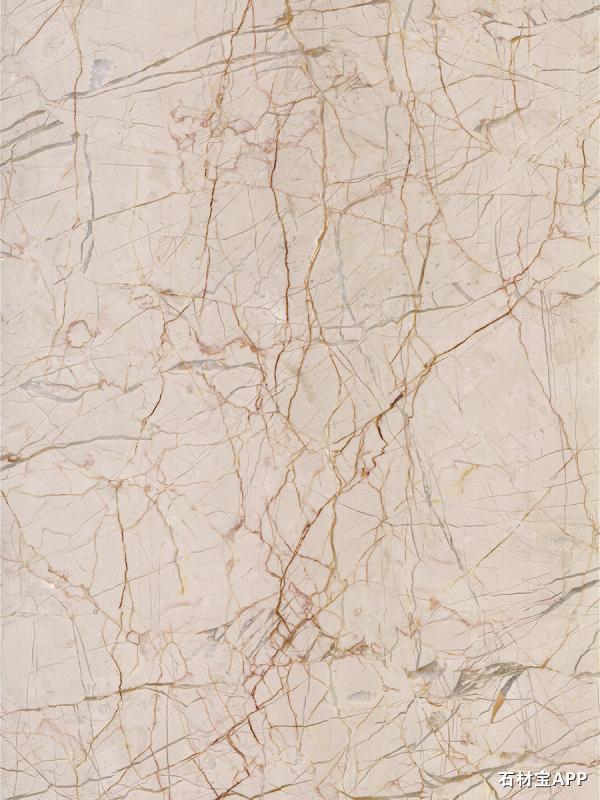 世纪米黄(红根1)