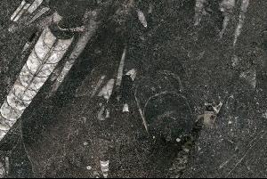 侏罗纪化石